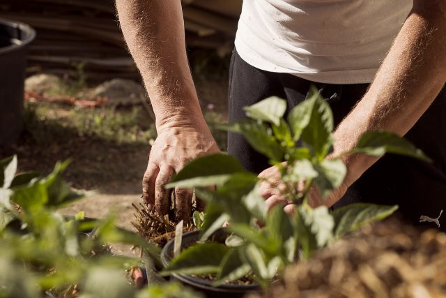 Jak łatwo zadbać o ogród